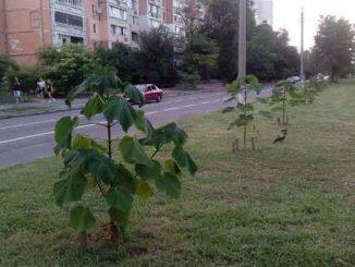 о новом сквере ,Николаев, катальпа деревья, сквер, саженцы, Садовая