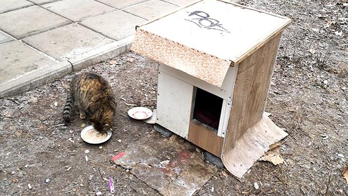 Уличные кошки, домики для кошек